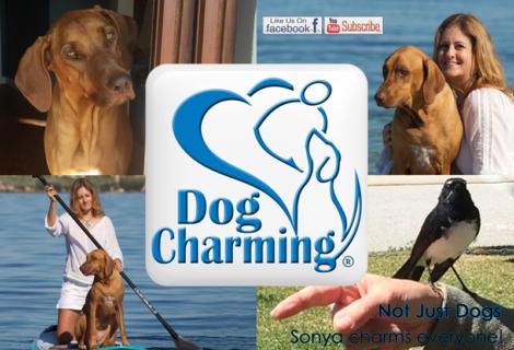 Dog Charming